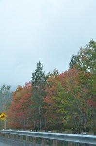 DSC_4960 2017-09-17 Canada-Route vers Parc de Forillon