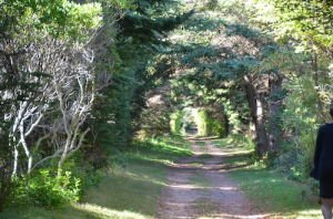 DSC_5251 2017-09-23 Canada-NS Île du Prince Edouard - Cavendish Homestead trail