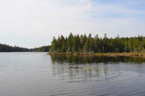DSC_5411 2017-09-26 Canada-NB Parc de Fundy Sentier Lac Tracey