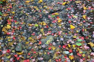 DSC_9643 2013-09-23 Canada Parc du Mont Orford