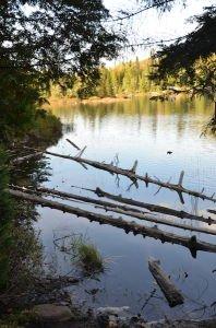 DSC_5695 2017-10-02 Canada QC Parc de la Mauricie Sentier Ruissea-Bouchard Lac solitaire